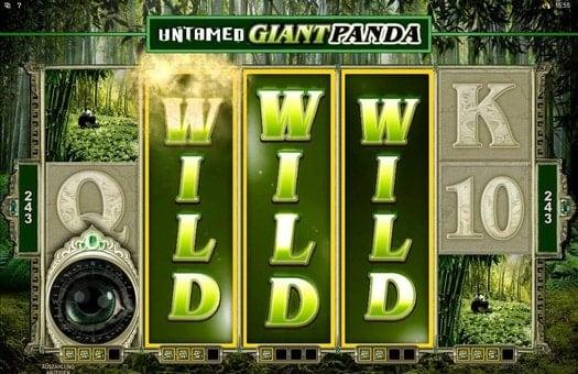 Выигрыш на линиях в автомате Untamed Giant Panda